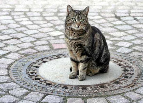 Do cats sit inside a circle or square? Mysterious Reasons