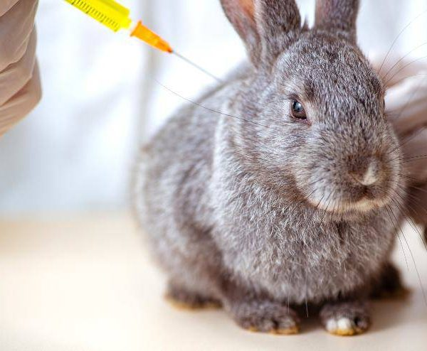Poisoning in the rabbit: symptoms and causes