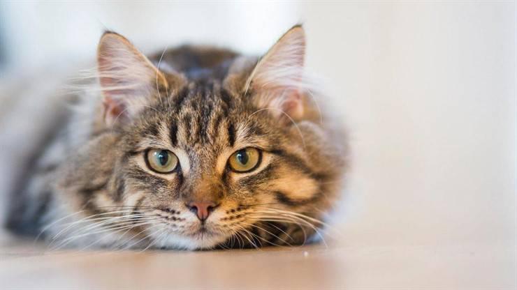 Socialize a shy cat