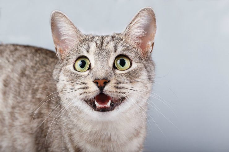 Cat mouth slightly open: Expression and Meaning (Depressed)
