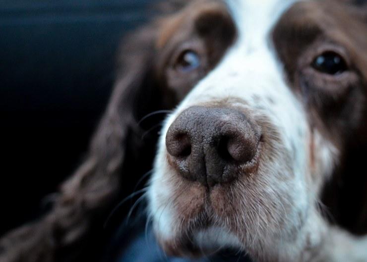 old dog loses fur