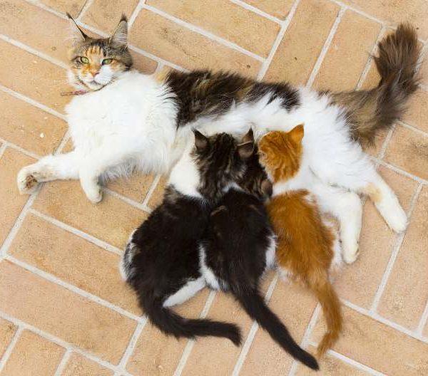 various cat behaviors