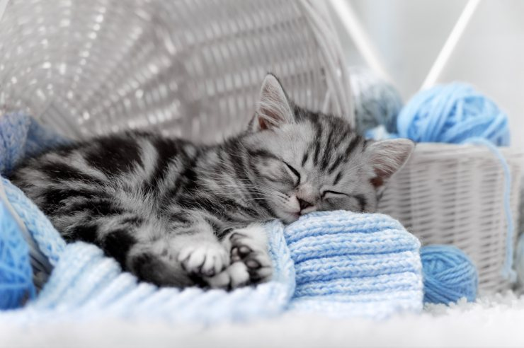 How to make the indoor cat live happily