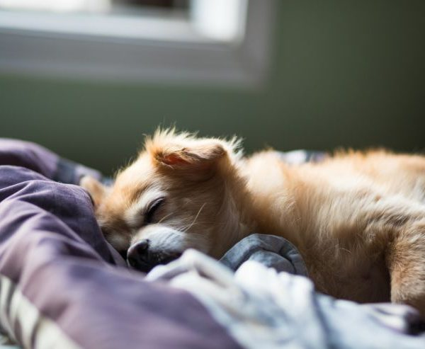 Top 10 Reasons – Dog is sleeping more than usual