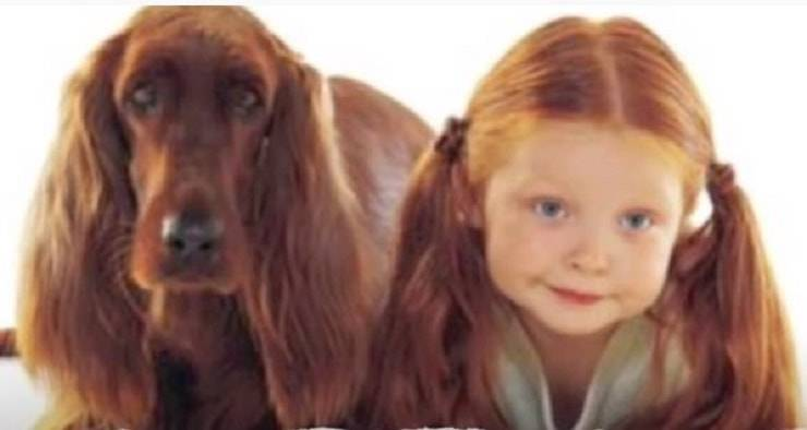 Top  10  Dog Owners  Who looks Similar
