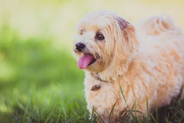 Top 10 Best Dog Parks in Italy