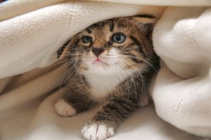 What to do if the cat eats a bedbug