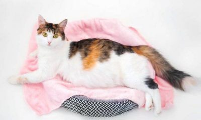 Abortion in the cat: causes and symptoms