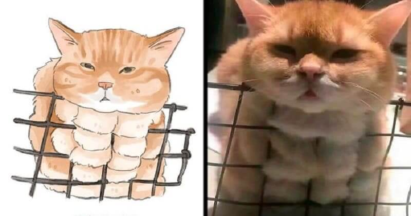25 + Cute Cat Pics That Artist Turns Into Funny Memes (Some Touching)
