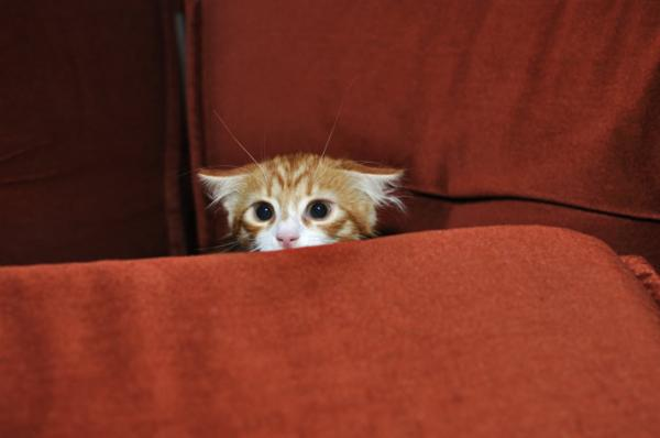 Why is my cat afraid of me?  - How to know if a cat is afraid?
