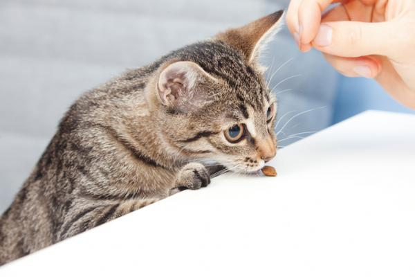Why is my cat afraid of me - Treatment of fear in cats