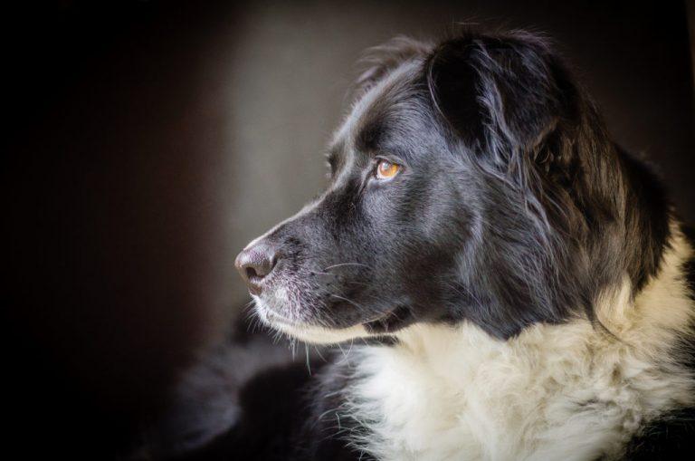 Top 5 New dog breeds: Origin | Breeds | Characteristics| Fun Facts