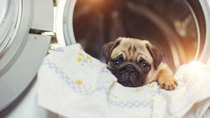 cane dentro la lavatrice