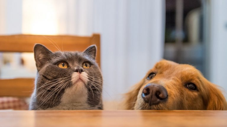 Who loves a dog or a cat: what are the differences love