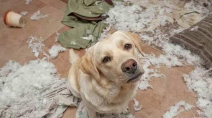 dog bit the sofa