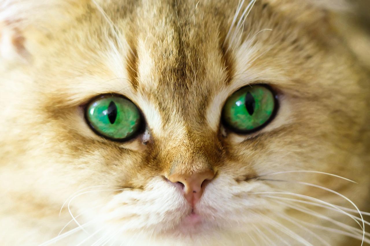 Gli occhi di un gatto