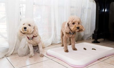 what they tell us about Fido's health