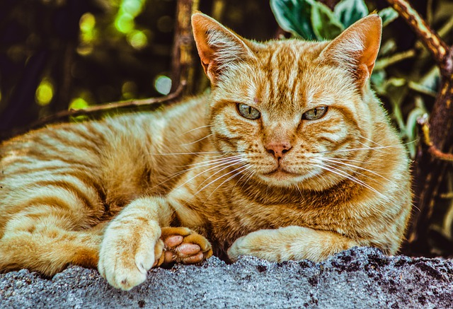 Cat tail language Top 10 most common tail movements  Hidden Meaning